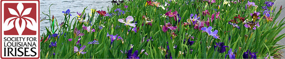 Society for Louisiana Irises