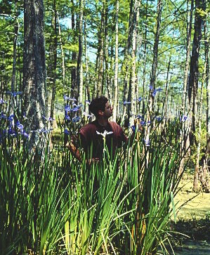 Mark A Smith, an early LAIRIS list member, admiring louisiana iris in their native swamp habitat